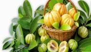 garcinia-cambogia-NGL_New-generation-life-herbalife